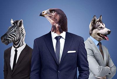 animales.en.la.oficina
